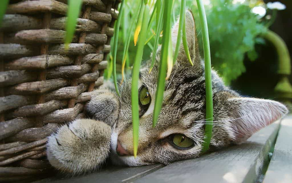 Are Pitcher Plants Poisonous to Cats?